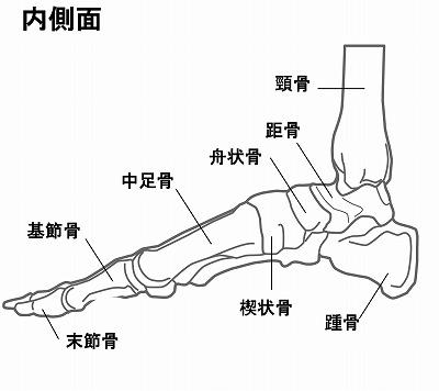 足裏の骨の図